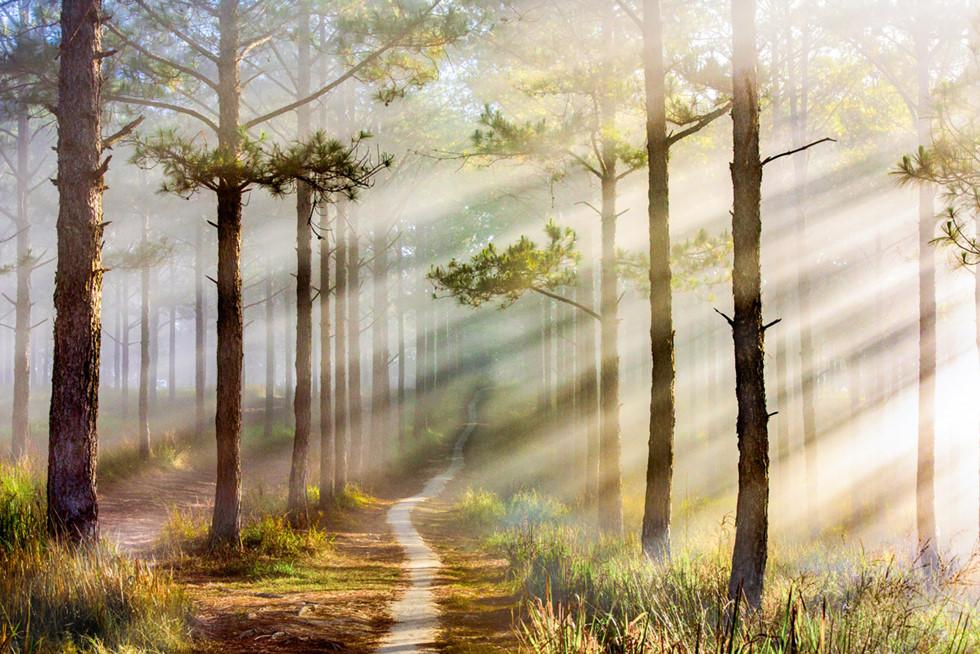 Đà Lạt, lạc giữa bềnh bồng trời mây trong mùa 'săn' đẹp nhất - Ảnh 2.