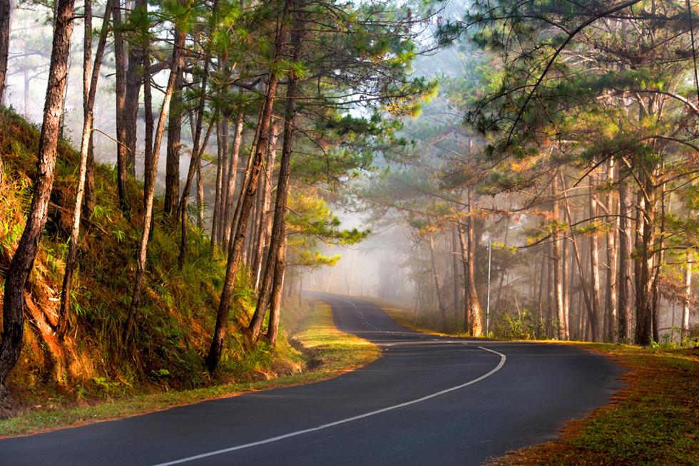 Đà Lạt, lạc giữa bềnh bồng trời mây trong mùa 'săn' đẹp nhất - Ảnh 3.
