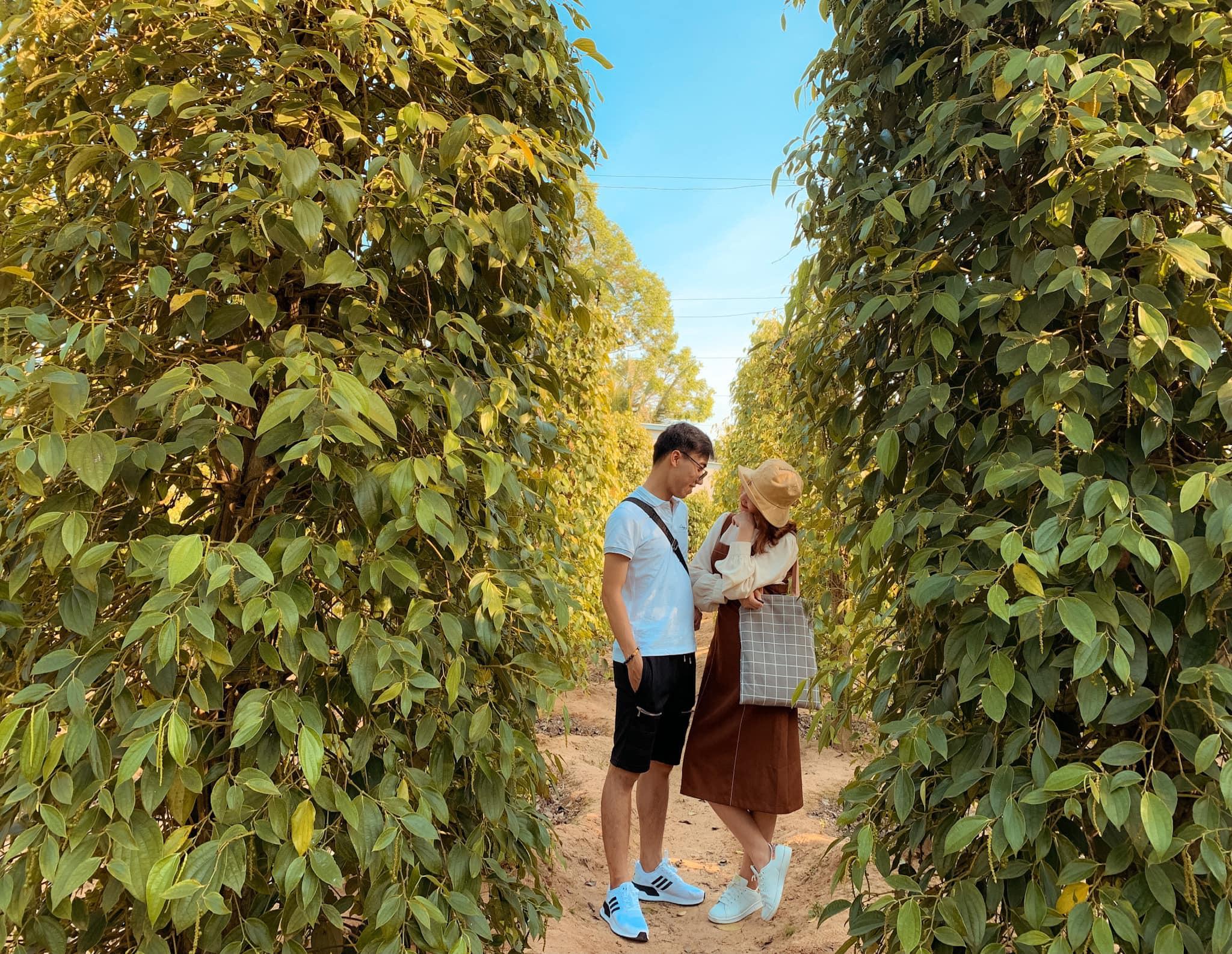Tour du lịch Phú Quốc khởi hành từ Rạch Giá: Vô vàn ưu đãi trong dịp hè này  - Ảnh 12.