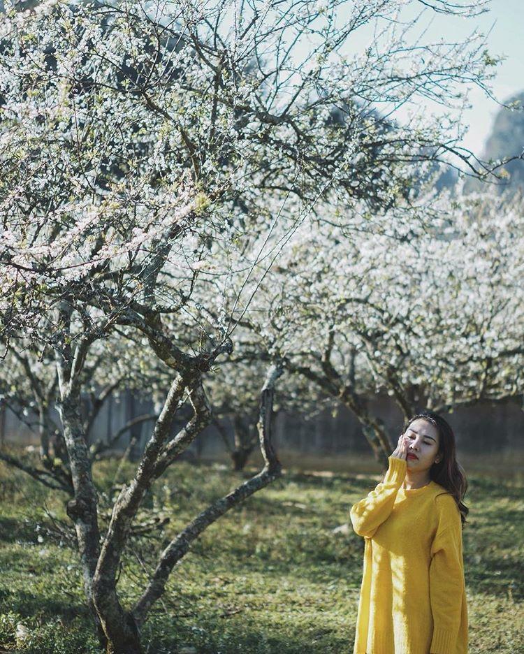 Mộc Châu ở đâu? Tìm về mảnh đất rực rỡ sắc hoa suốt bốn mùa - Ảnh 1.
