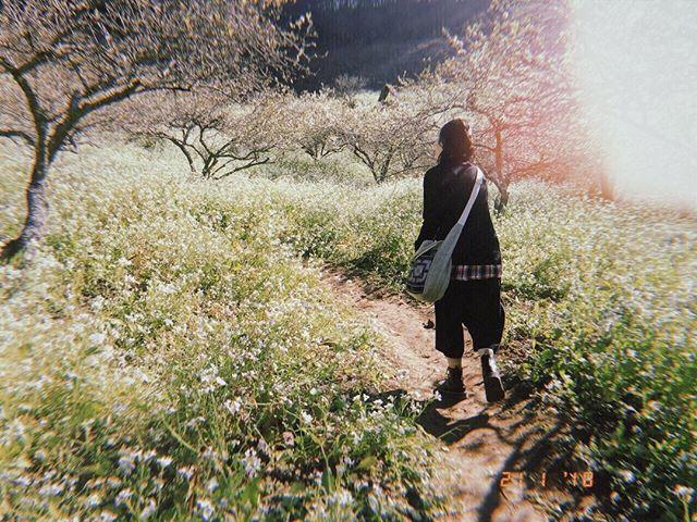Mộc Châu ở đâu? Tìm về mảnh đất rực rỡ sắc hoa suốt bốn mùa - Ảnh 8.