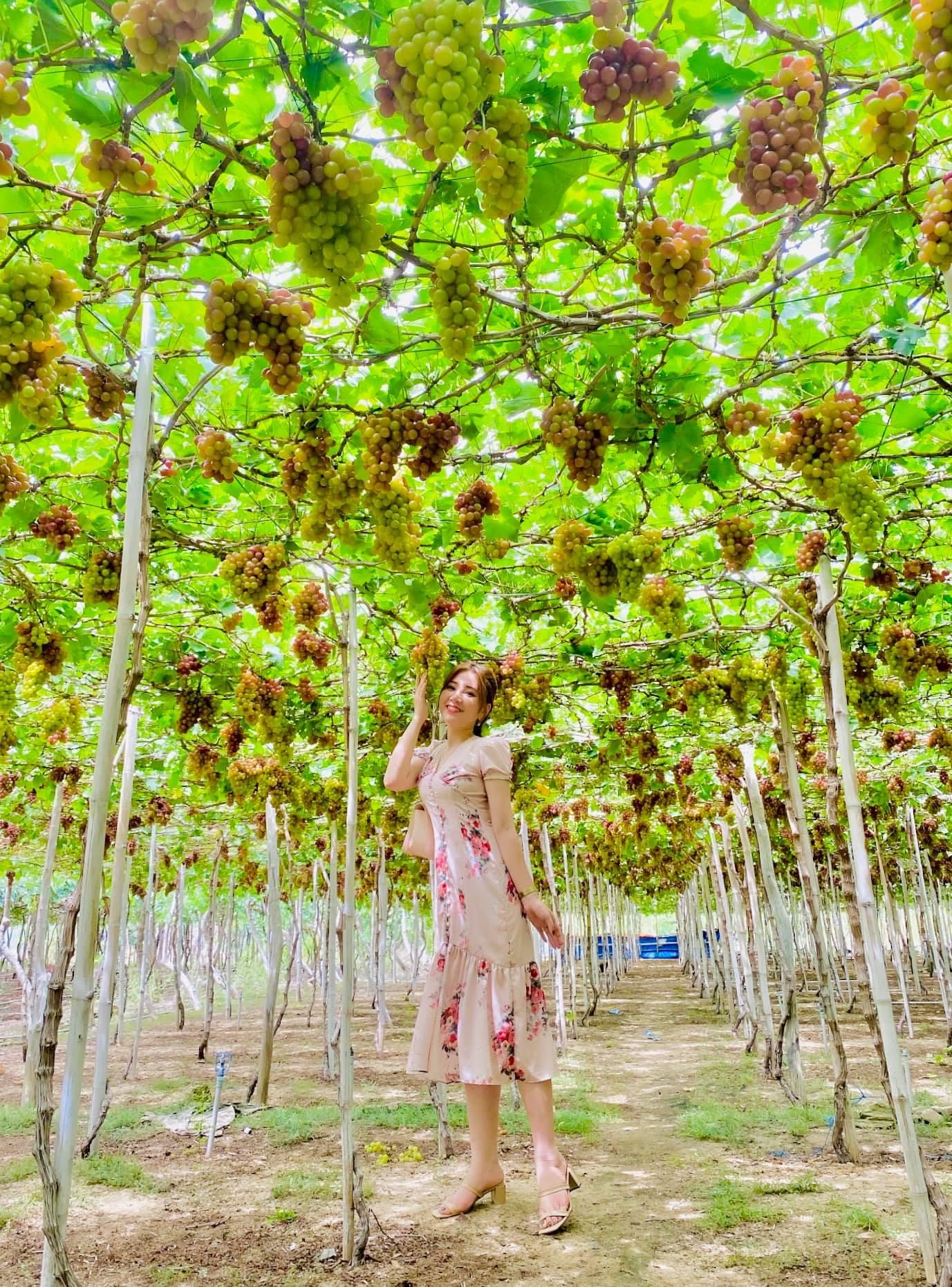 Tour du lịch Nha Trang từ TP HCM: Thưởng ngoạn mỹ cảnh tại hòn ngọc Việt  - Ảnh 11.