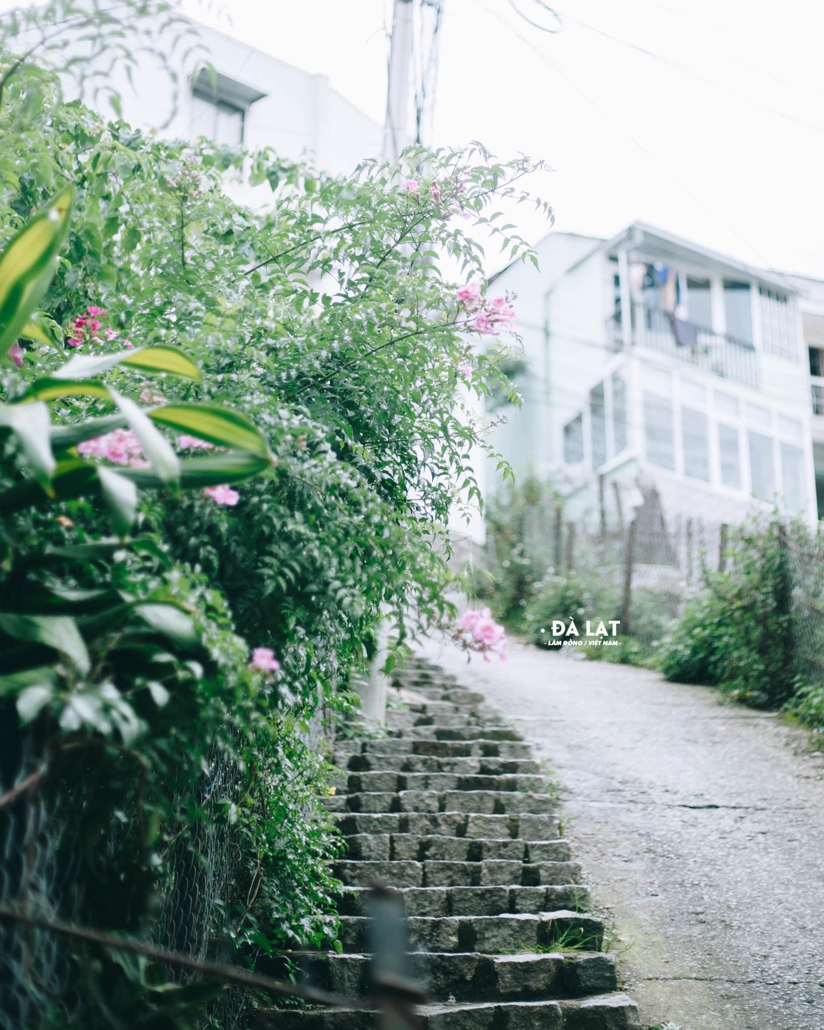 Khám phá lịch sử Đà Lạt - tìm về miền đất ngập tràn sắc hoa nơi phố núi  - Ảnh 10.