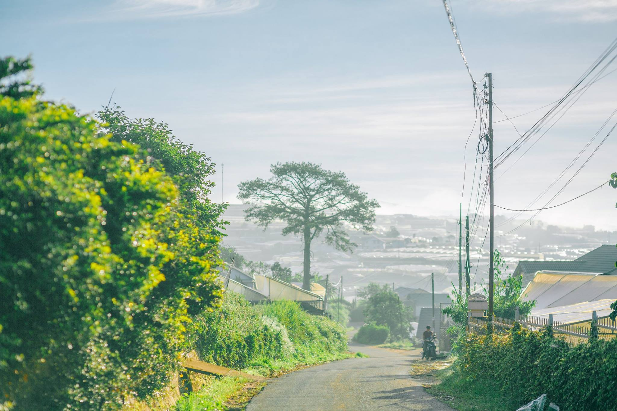 Khám phá lịch sử Đà Lạt - tìm về miền đất ngập tràn sắc hoa nơi phố núi  - Ảnh 8.