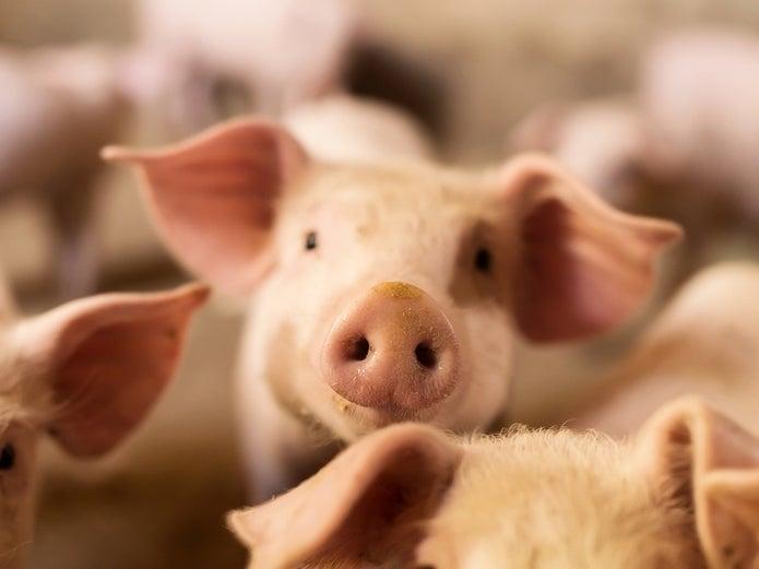 Dự báo giá heo hơi ngày 12/9: Đẩy mạnh chăn nuôi an toàn sinh học, giá thu mua sắp tới sẽ giảm?   - Ảnh 1.