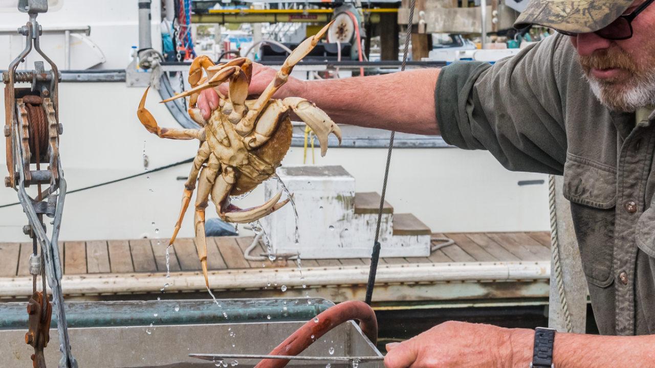 USDA hỗ trợ 530 triệu USD cho ngành thủy sản Mỹ  - Ảnh 1.