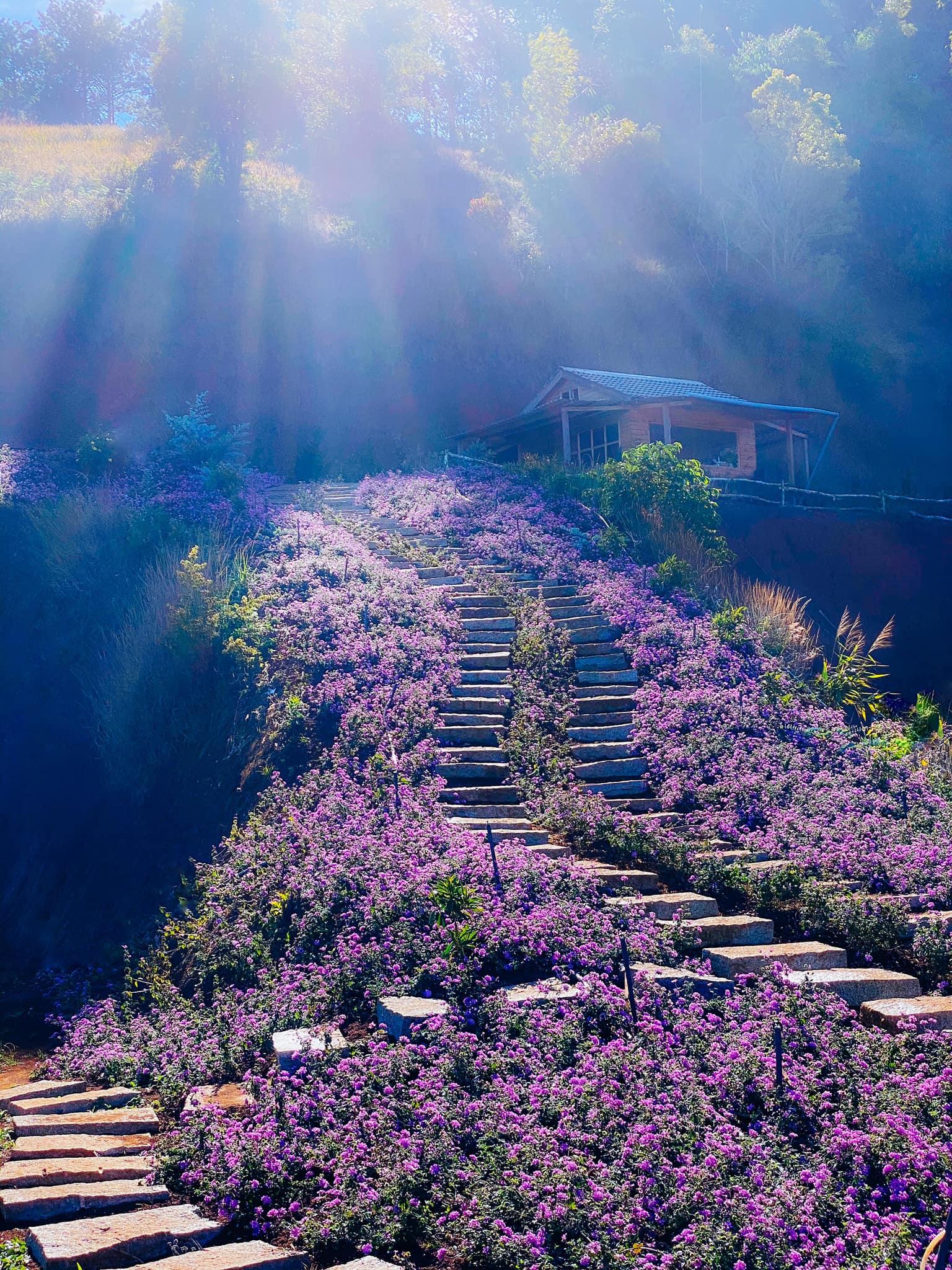 Check-in Vườn hoa lavender Túi Thương Nhớ, điểm đến 'mới toanh' tại Đà Lạt  - Ảnh 2.