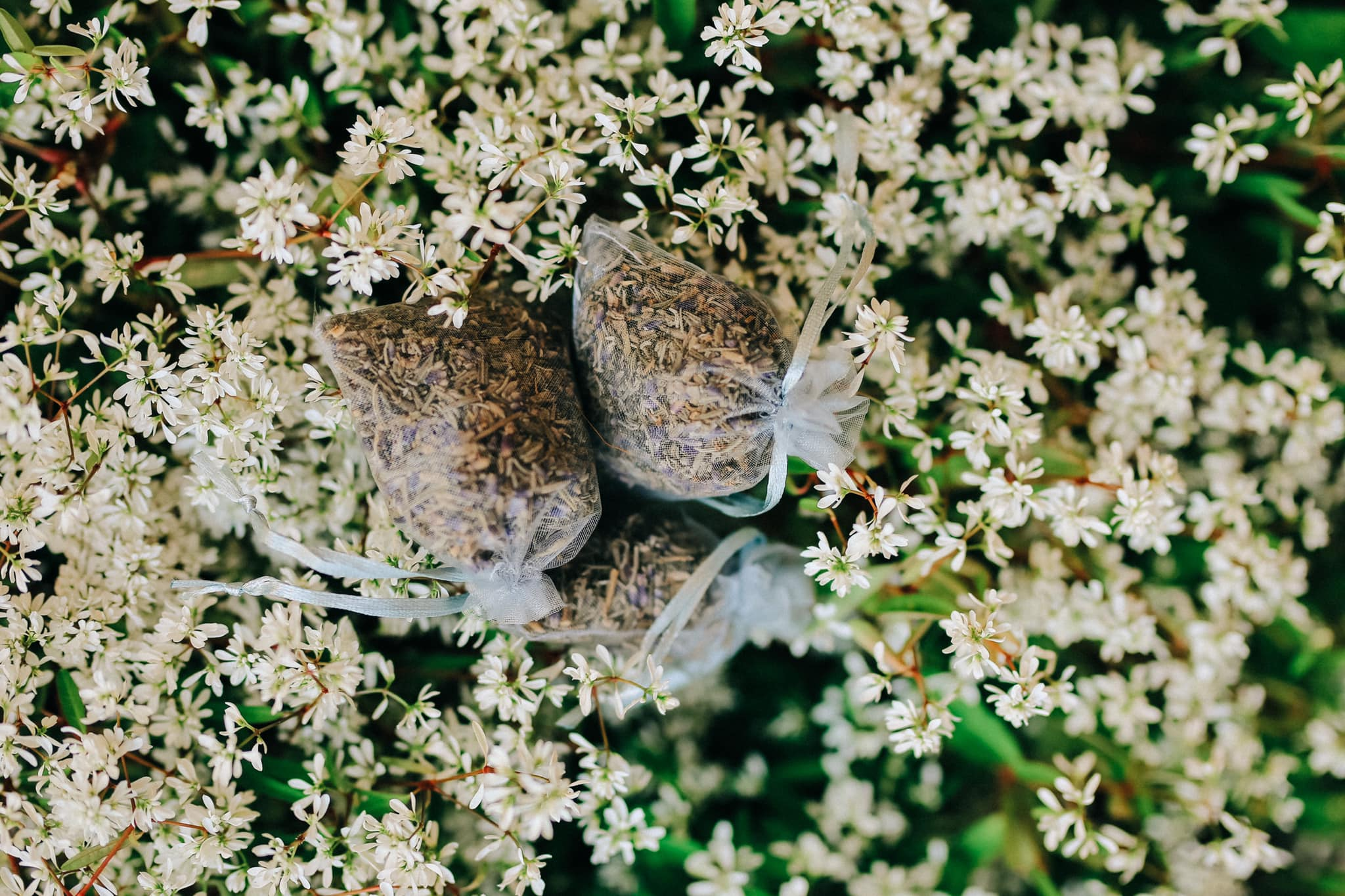 Check-in Vườn hoa lavender Túi Thương Nhớ, điểm đến 'mới toanh' tại Đà Lạt  - Ảnh 7.