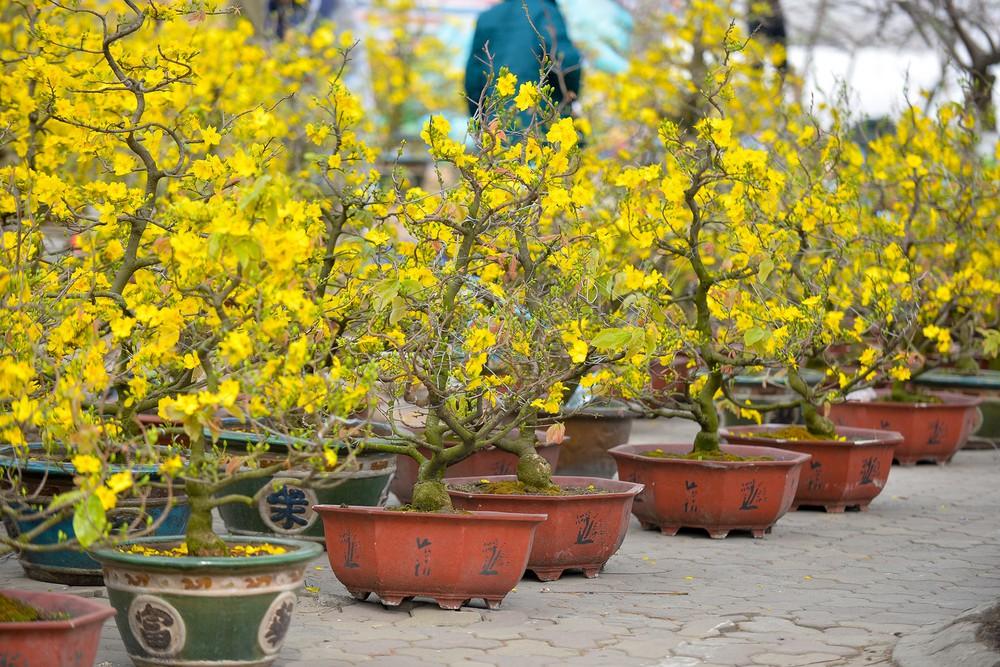 Gợi ý các địa chỉ bán hoa đào, hoa mai ngày Tết ở hai miền Bắc - Nam - Ảnh 10.