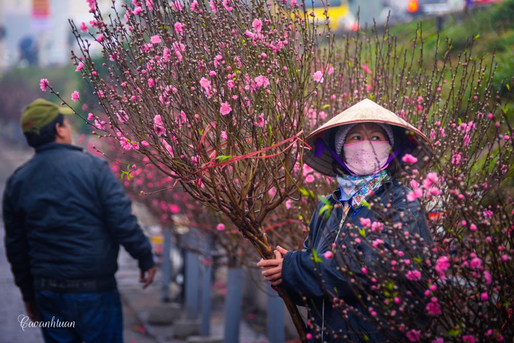Gợi ý các địa chỉ bán hoa đào, hoa mai ngày Tết ở hai miền Bắc - Nam - Ảnh 3.