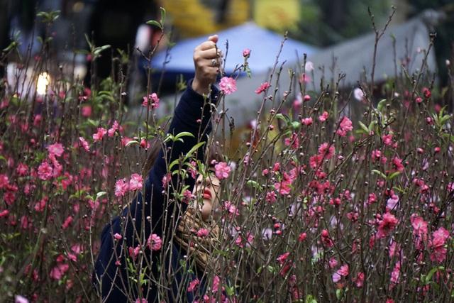 Gợi ý các địa chỉ bán hoa đào, hoa mai ngày Tết ở hai miền Bắc - Nam - Ảnh 5.