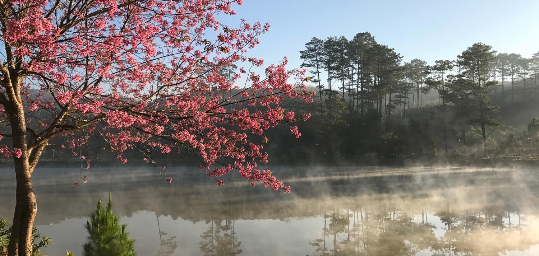Những địa điểm ngắm hoa nổi tiếng trong mùa mai anh đào ở Đà Lạt  - Ảnh 4.