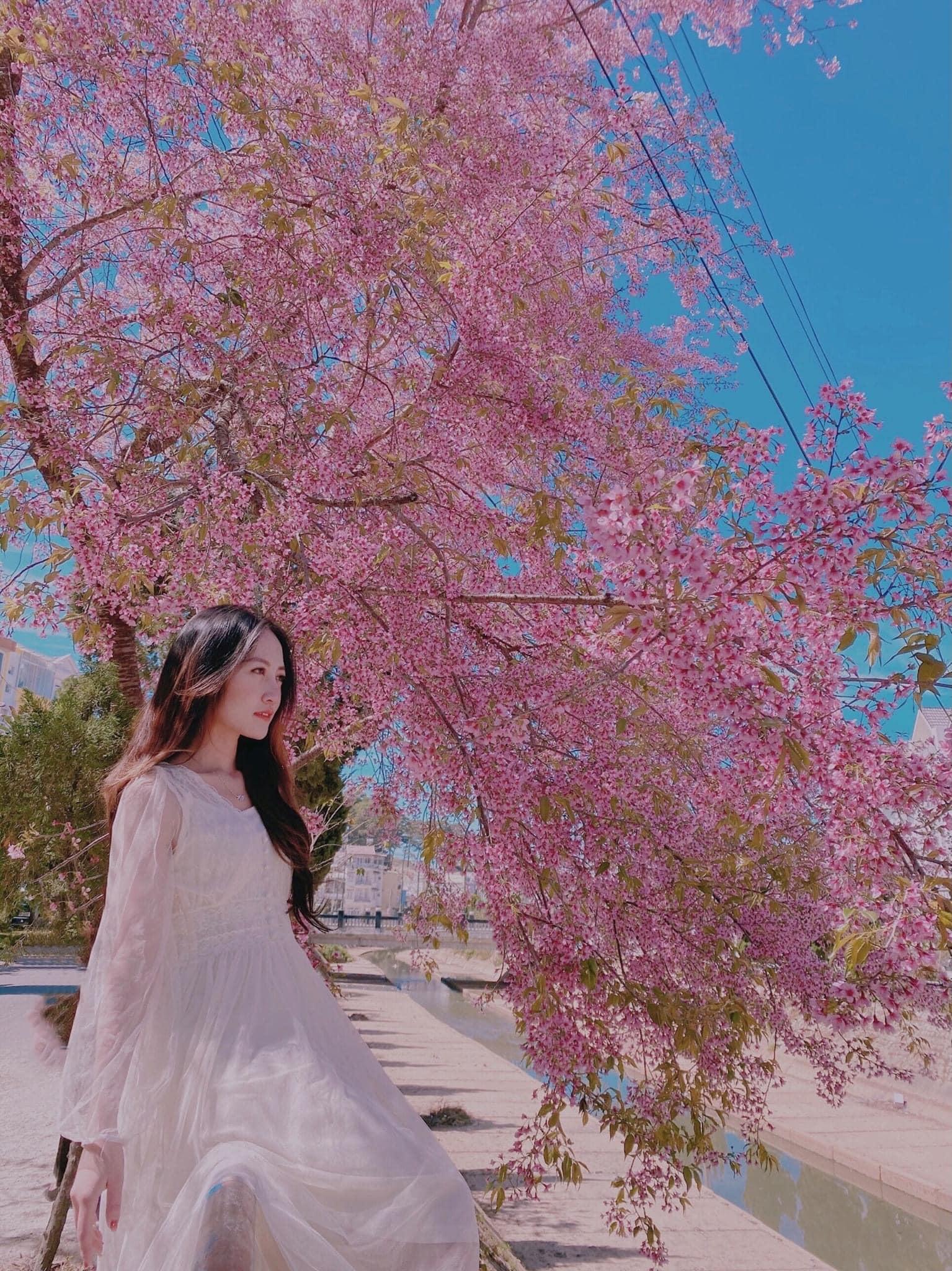Những địa điểm ngắm hoa nổi tiếng trong mùa mai anh đào ở Đà Lạt  - Ảnh 1.