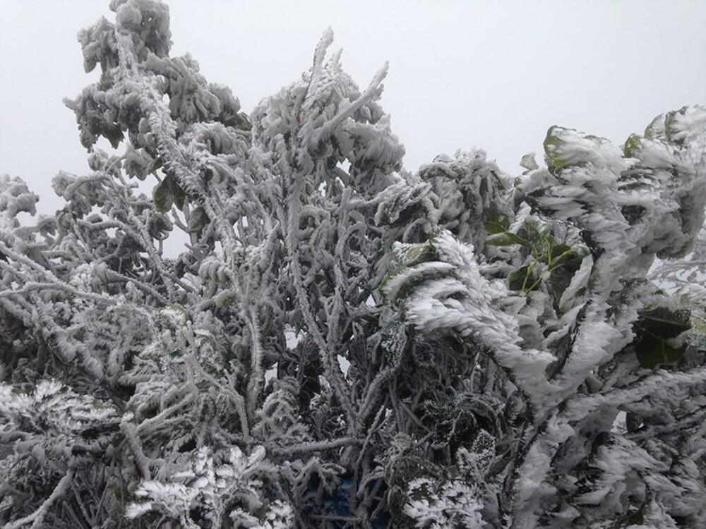 Thời tiết Hà Nội hôm nay 9/1: Không khí lạnh tiếp tục gây rét đậm, rét hại, Hải Phòng rét 10 độ - Ảnh 1.