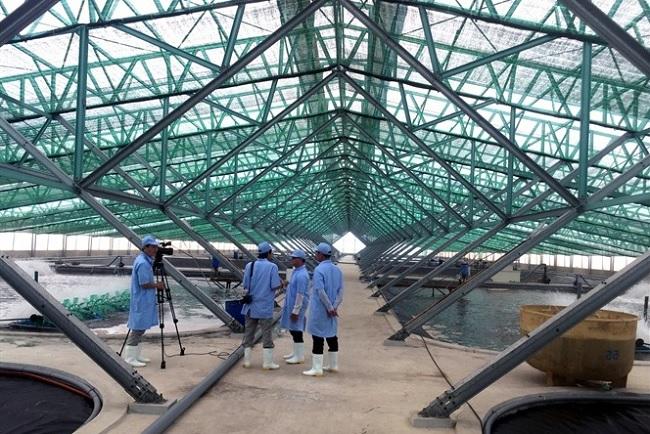 Bình Định: Tìm nhà đầu tư triển khai Quy hoạch Khu nông nghiệp ứng dụng CNC phát triển tôm hơn 2.000 tỷ đồng - Ảnh 1.