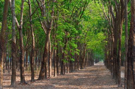 Đồng Nai thu hồi gần 10 ha đất gần sân bay Long Thành để đấu giá - Ảnh 1.