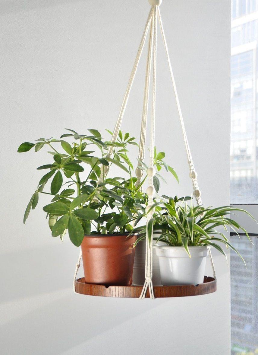 Top 9 loại cây giúp khử mùi hiệu quả trong nhà vệ sinh - Ảnh 8.
