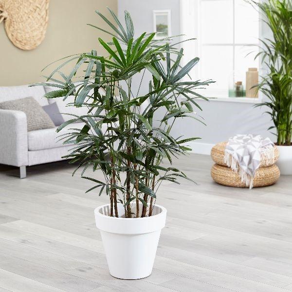 Top 9 loại cây giúp khử mùi hiệu quả trong nhà vệ sinh - Ảnh 5.