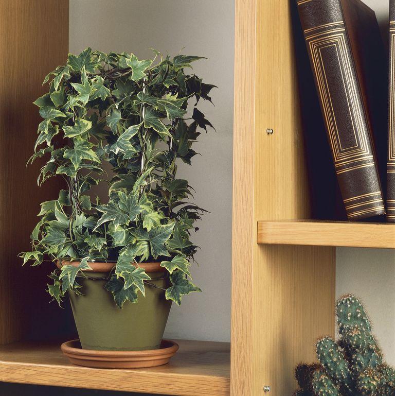 Top 9 loại cây giúp khử mùi hiệu quả trong nhà vệ sinh - Ảnh 1.