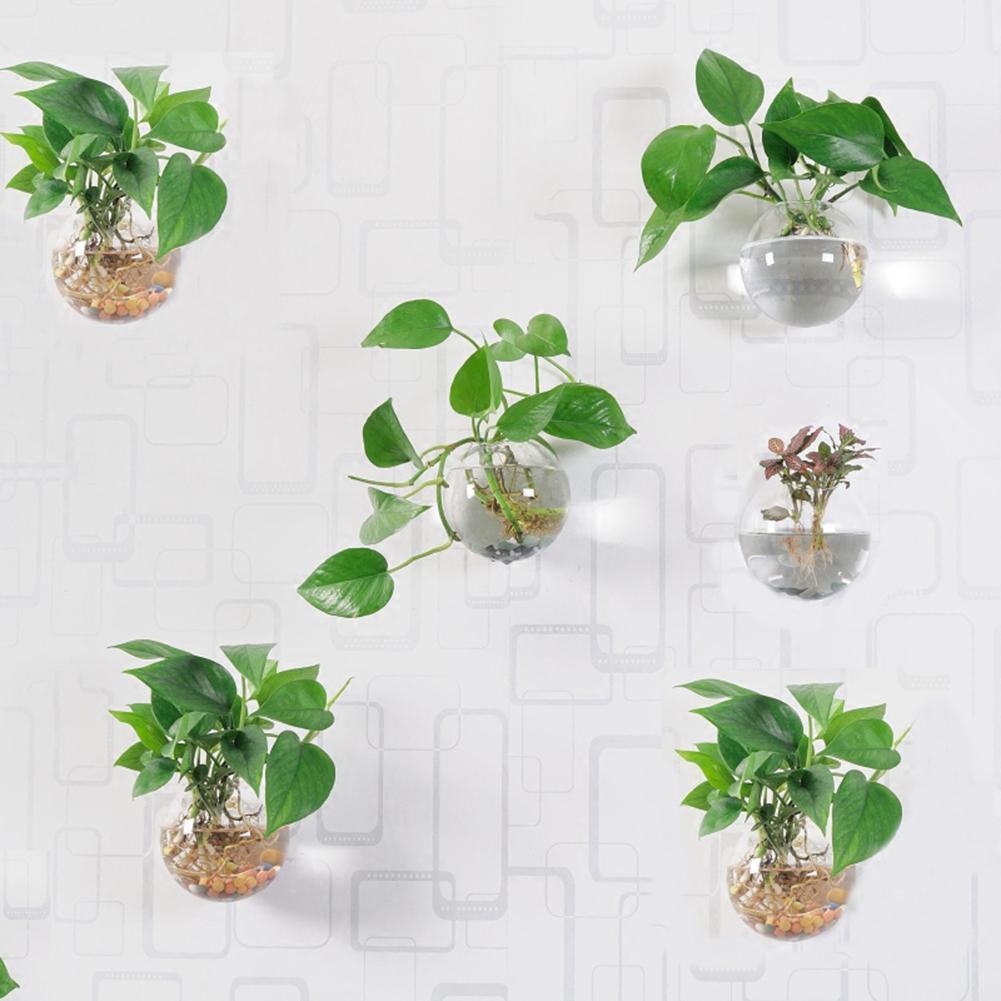 Top 9 loại cây giúp khử mùi hiệu quả trong nhà vệ sinh - Ảnh 6.