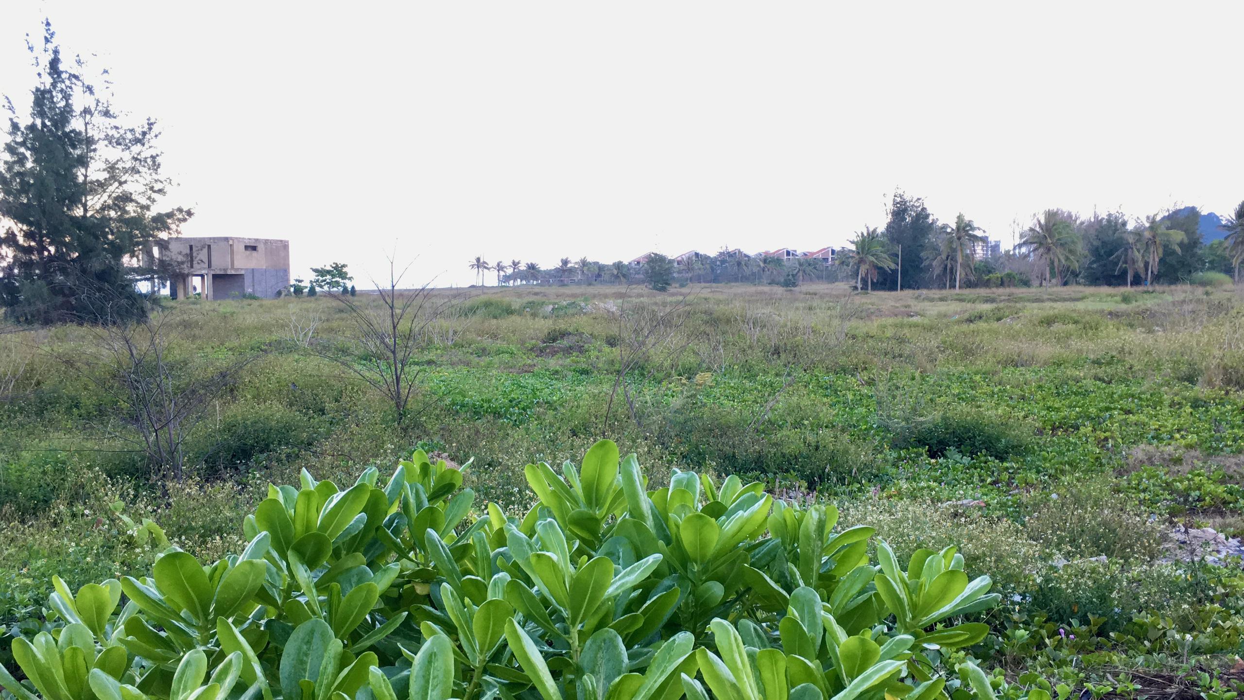 Dự án hơn 12 ha ven biển Đà Nẵng mà Công ty của vợ chồng Chủ tịch VNDirect muốn rút đầu tư hiện đang bỏ hoang - Ảnh 8.