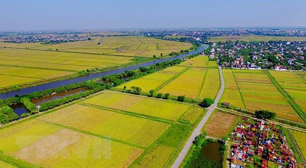 Hà Nội dồn điền, đổi thửa được 79.000 ha, mỗi hộ có 10 -15 ô - Ảnh 1.