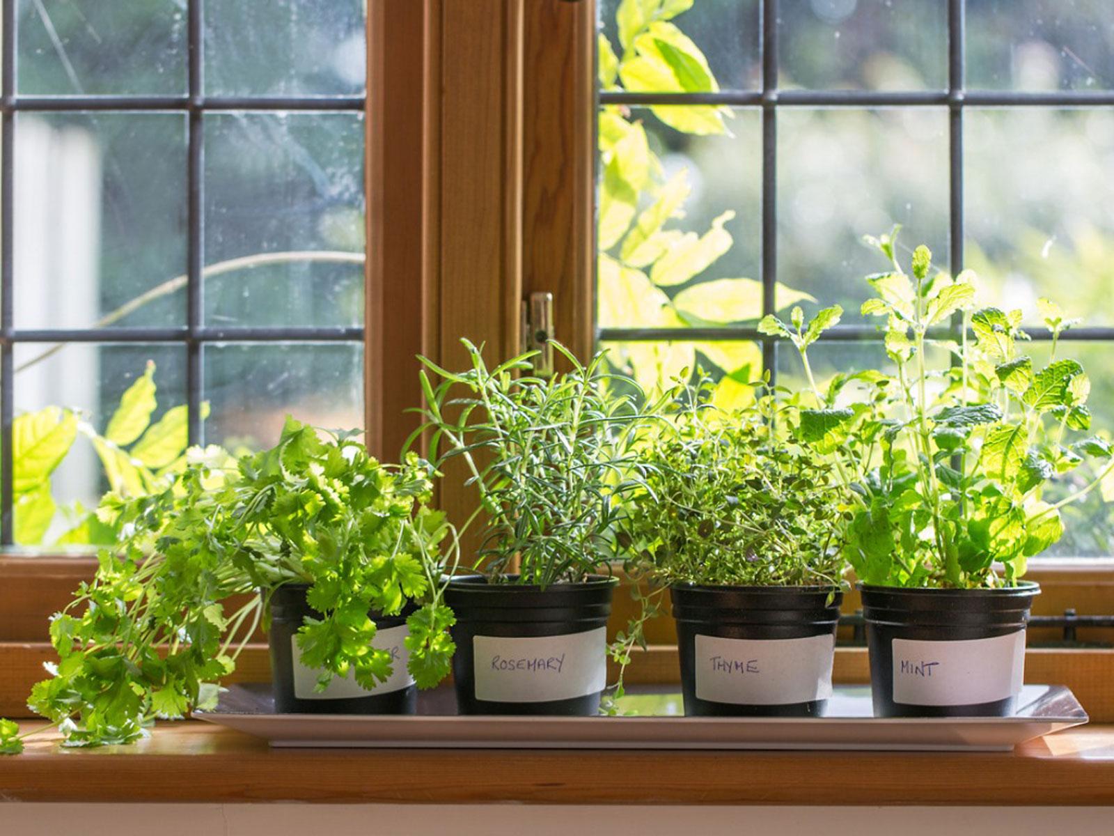 Top 5 ý tưởng thú vị, giúp kiến tạo không gian sống xanh cho gia đình - Ảnh 4.