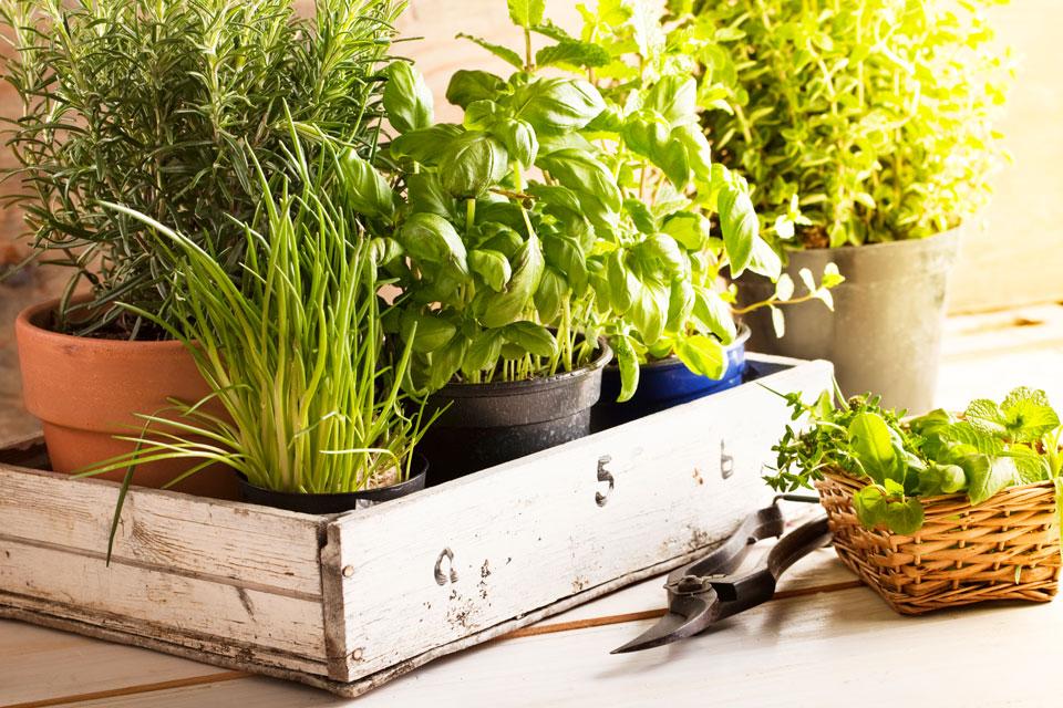 Top 5 ý tưởng thú vị, giúp kiến tạo không gian sống xanh cho gia đình - Ảnh 5.