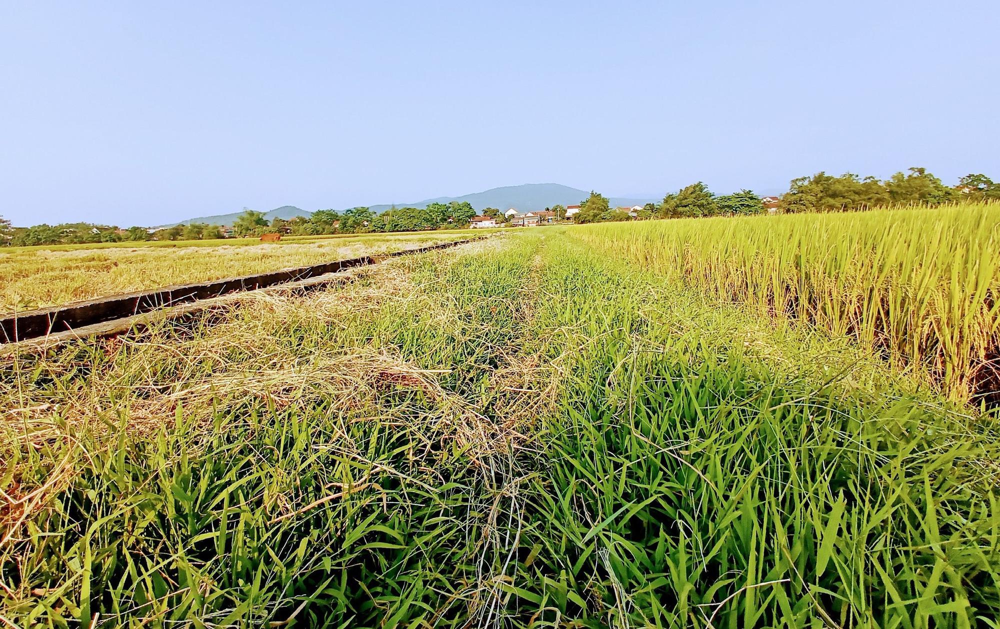 Hưng Yên được phép chuyển 65,6 ha đất trồng lúa sang đất phi nông nghiệp - Ảnh 1.