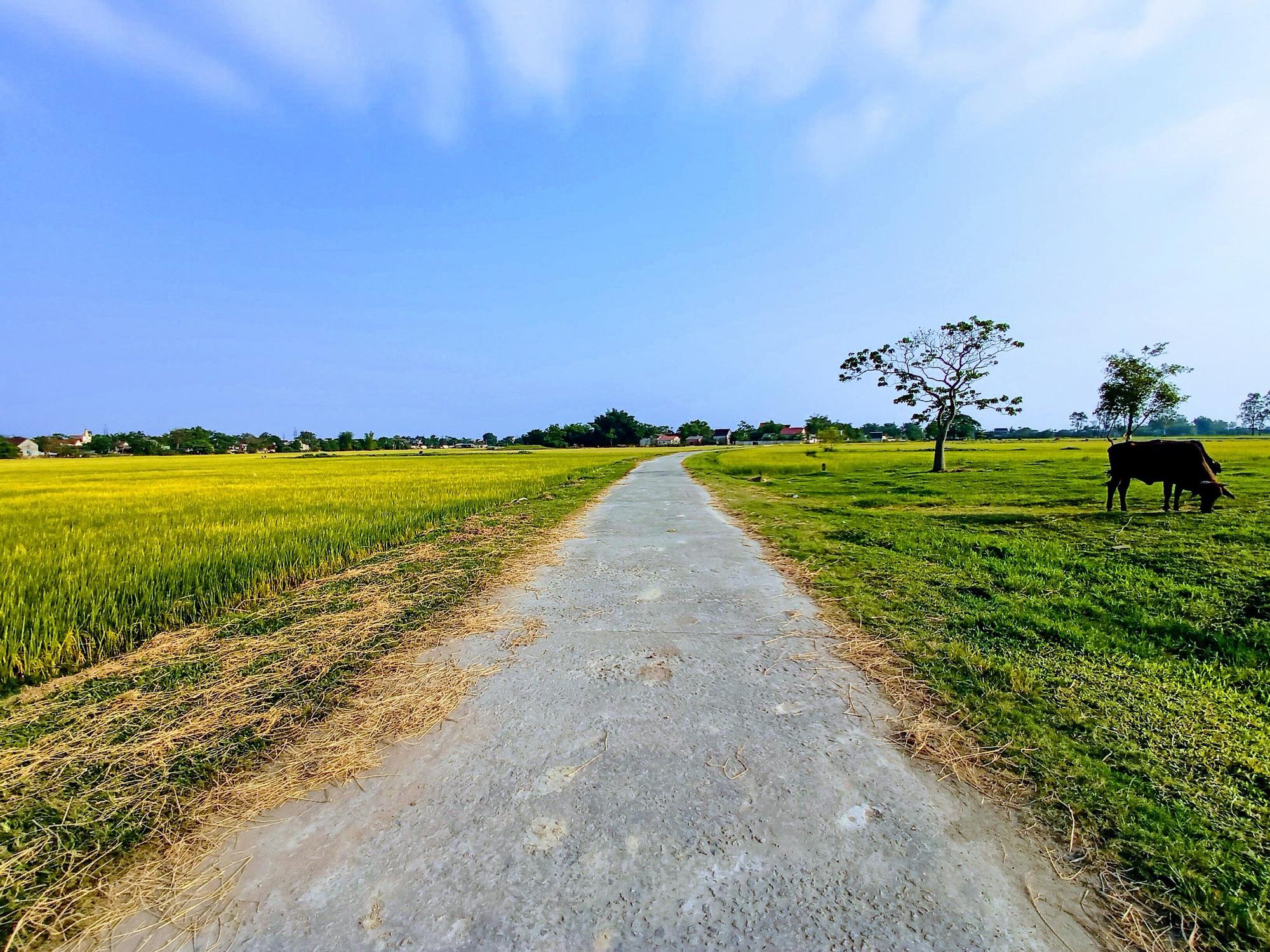 Hưng Yên được phép chuyển thêm hơn 32 ha đất trồng lúa sang đất phi nông nghiệp - Ảnh 1.