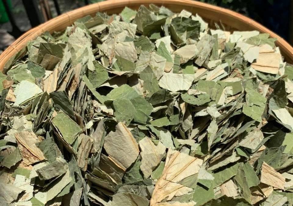Loại lá mọc tràn ao bùn Việt Nam, 400.000 đồng/kg, chị em ưa dùng để giữ eo - Ảnh 1.