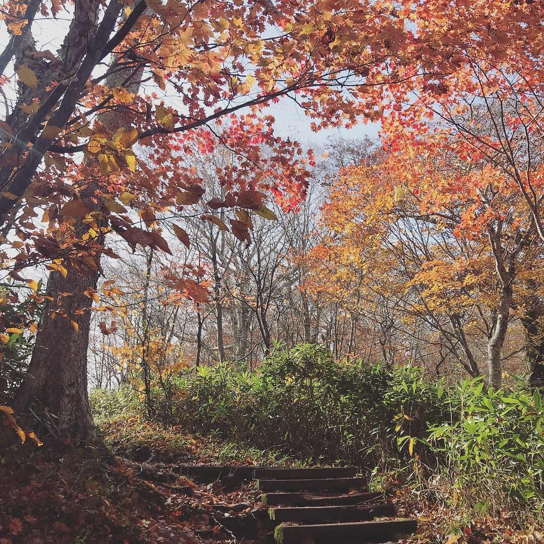 7 điểm ngắm lá mùa thu đẹp nhất Nhật Bản - Ảnh 10.