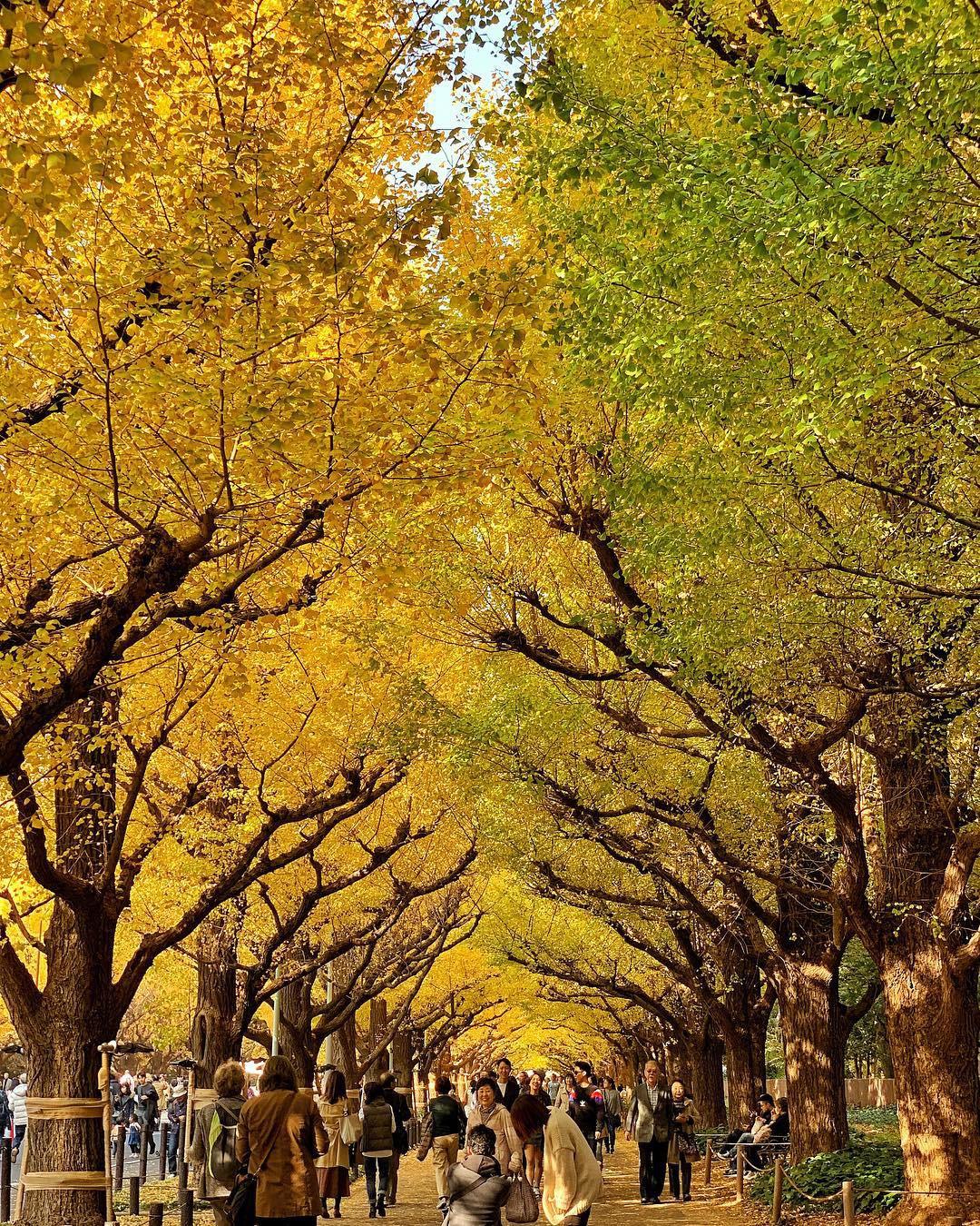 7 điểm ngắm lá mùa thu đẹp nhất Nhật Bản - Ảnh 4.