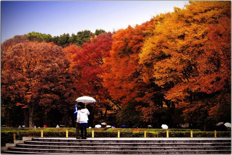 7 điểm ngắm lá mùa thu đẹp nhất Nhật Bản - Ảnh 7.