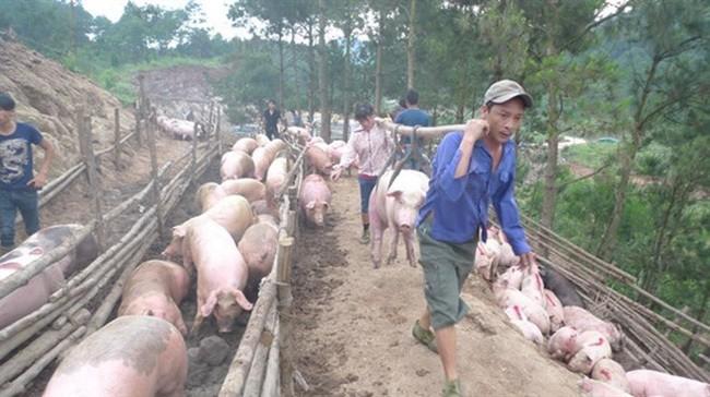 Cấmxuất lợn sang Trung Quốc, giải thích từ Bộ Nông nghiệp  - Ảnh 1.