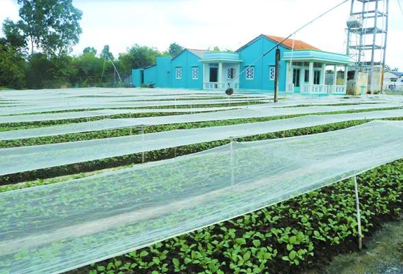 'Đột nhập' vùng trồng rau miền Tây tươi mướt như ở Đà Lạt cung cấp cho Bách Hóa Xanh - Ảnh 4.