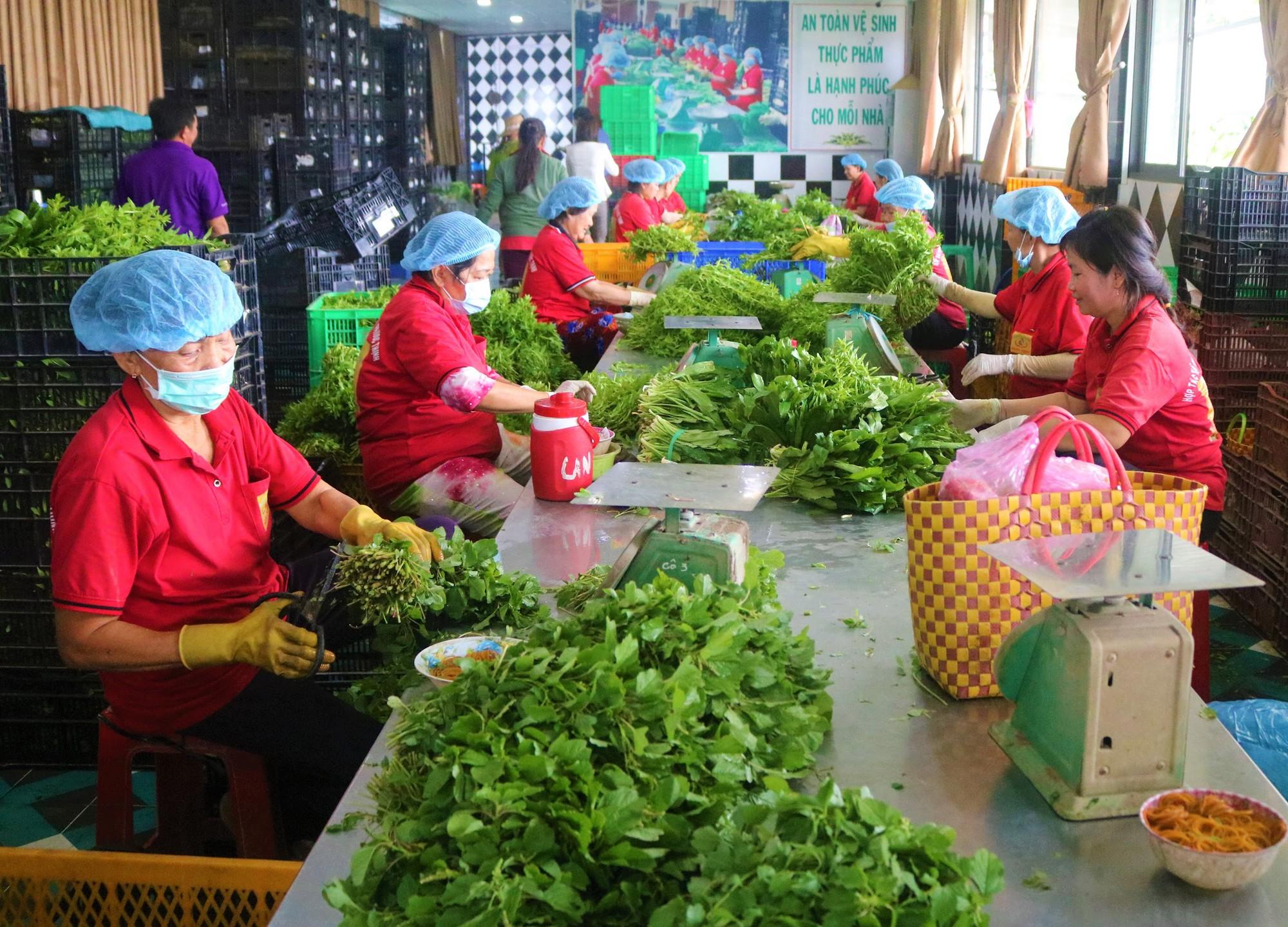 'Đột nhập' vùng trồng rau miền Tây tươi mướt như ở Đà Lạt cung cấp cho Bách Hóa Xanh - Ảnh 5.