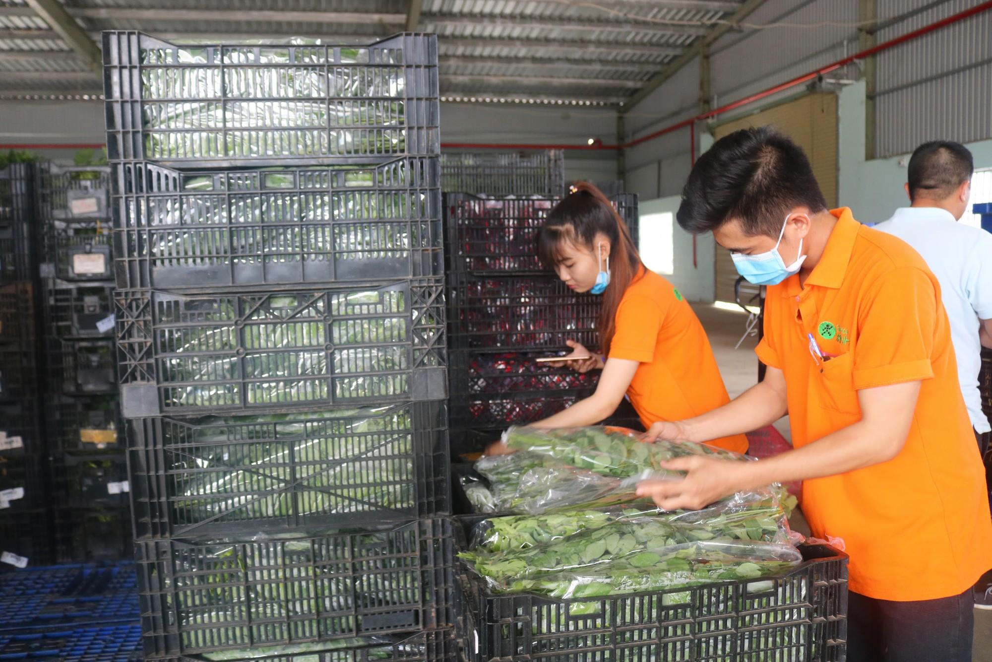 'Đột nhập' vùng trồng rau miền Tây tươi mướt như ở Đà Lạt cung cấp cho Bách Hóa Xanh - Ảnh 7.