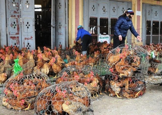 150.000 tấn thịt gà ngoại giá 21.000 đồng/kg, cứ nhập thoải mái không lo gì - Ảnh 2.