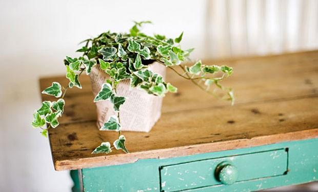 english-ivy