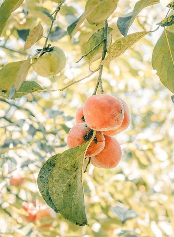 Mùa này đừng quên check-in vườn hồng chín đỏ mọng tuyệt đẹp ở Đà Lạt - Ảnh 4.