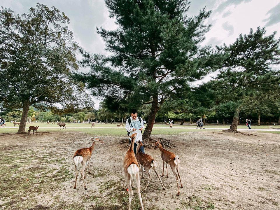 Tour du lich Tet Ha Noi Nhat Ban (2)