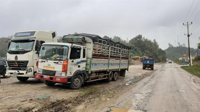 Trung Quốc giá đắt gấp đôi, bất chấp lệnh cấm ồ ạt đưa lợn qua biên - Ảnh 1.