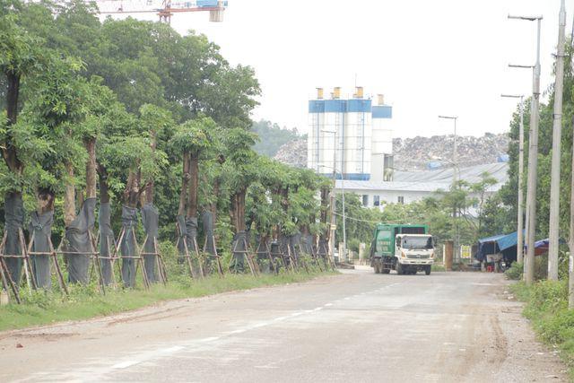 Hàng cây hoa sữa chuyển từ Hồ Tây đến bãi rác Nam Sơn giờ ra sao? - Ảnh 3.