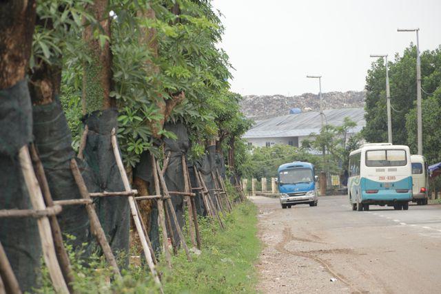 Hàng cây hoa sữa chuyển từ Hồ Tây đến bãi rác Nam Sơn giờ ra sao? - Ảnh 4.