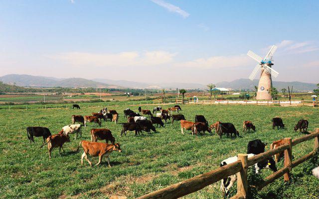 ghe-tham-vinamilk-organic-milk-farm-vntrip-e1529997456341