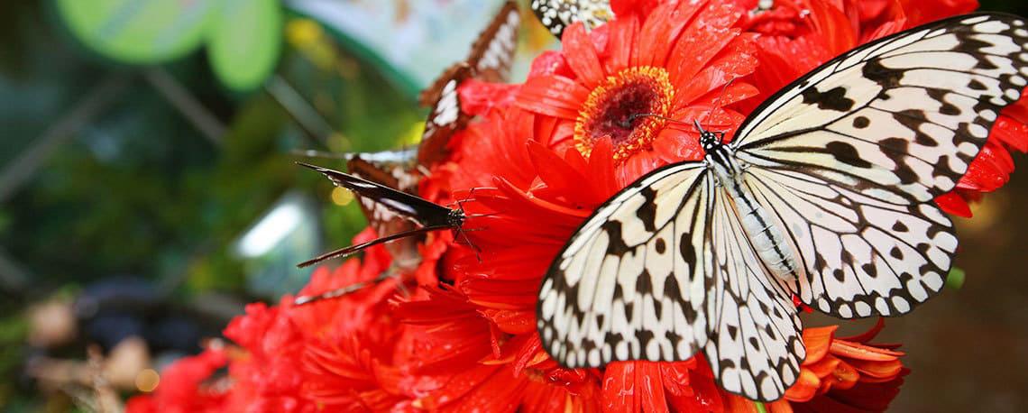 Singapore-Changi-Airport-butterfly_garden