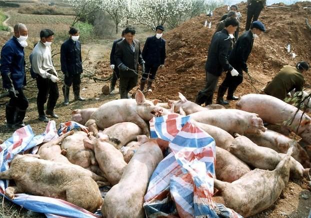 Dự báo giá heo hơi ngày 17/3: Nghệ An xuất hiện thêm ổ dịch tả lợn châu Phi - Ảnh 1.
