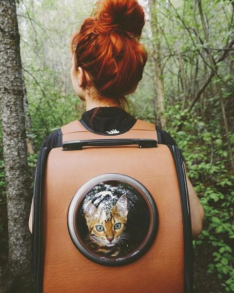 Du lịch sang chảnh cùng mèo cưng khắp chốn tiên cảnh trên thế giới - Ảnh 1.