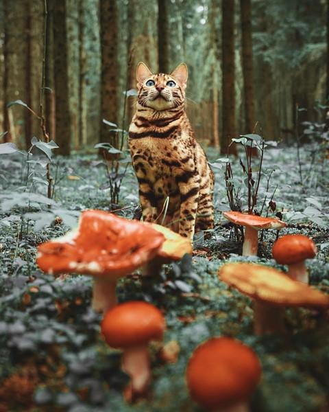 Du lịch sang chảnh cùng mèo cưng khắp chốn tiên cảnh trên thế giới - Ảnh 13.